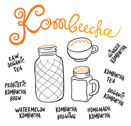 quencher: Kombucha (Hongo) in different glass containers - Natural homemade healthy drink for health - hand drawing vector illustration