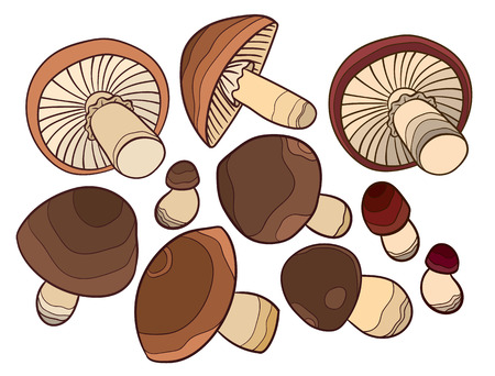 small group of objects: set of vector mushroom - drawing for design