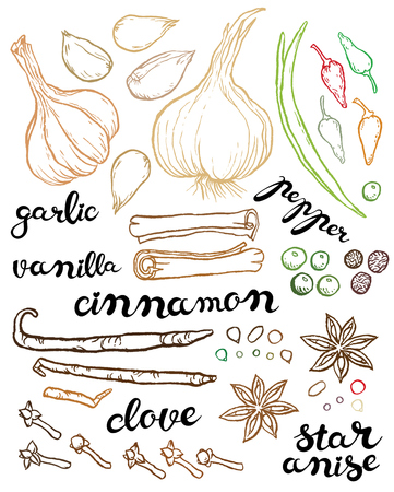 large set of herbs and spices - vector hand drawing illustration with exclusive hand written vector lettering Illustration