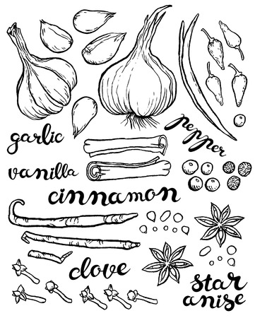 garlic clove: large set of herbs and spices - vector hand drawing illustration with exclusive hand written vector lettering Illustration