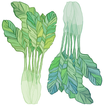 Green salad - vector hand drawing