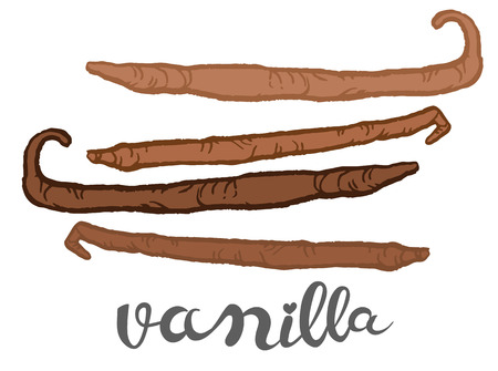 Vanilla pods - hand drawn vector illustration, can be used as  design element