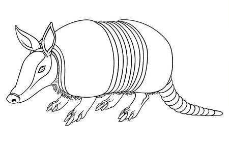 Illustration of a cute cartoon armadillo