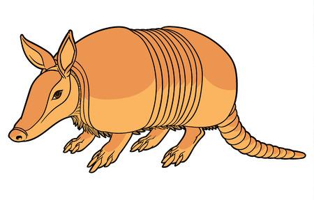 Illustration of a cute cartoon armadillo