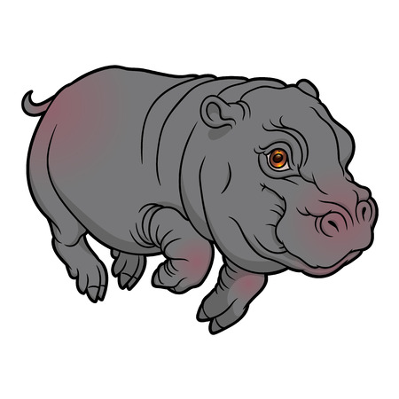 semi aquatic: illustration of cute naturalistic Hippopotamus - vector baby hippo