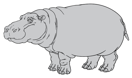 behemoth: naturalistic vector hand drawing illustration of hippo or Hippopotamus amphibius or river horse