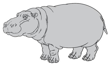 vecteur naturaliste dessin illustration de l'hippopotame ou Hippopotamus amphibius ou cheval de rivière main