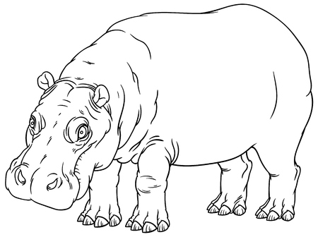 semi aquatic: naturalistic vector hand drawing illustration of hippo or Hippopotamus amphibius or river horse