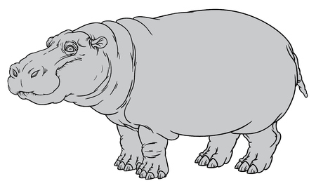 naturalistic: naturalistic vector hand drawing illustration of hippo or Hippopotamus amphibius or river horse