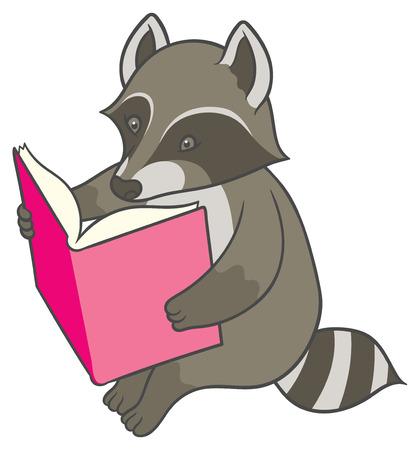 Cartoon raccoon reading a big book - vector drawing