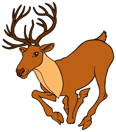 white tail deer: cute cartoon alive deer running with big horns - vector illustration Illustration