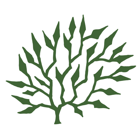 seaweed: green seaweed - stylized vector illustration