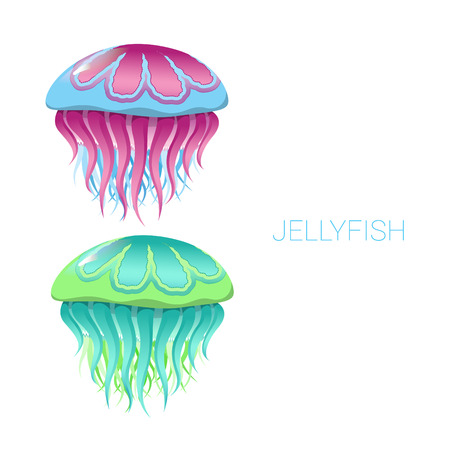 oceanography: fantastic jellyfish - vector illustrations of marine life for design