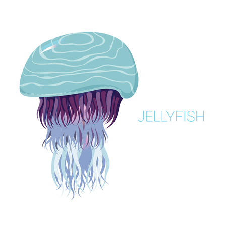 nettle: fantastic jellyfish - vector illustrations of marine life for design