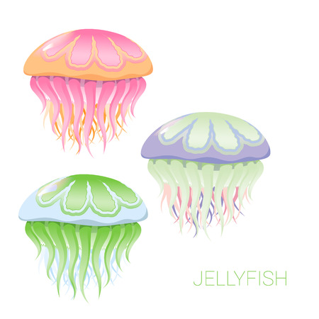 and marine life: fantastic jellyfish - vector illustrations of marine life for design