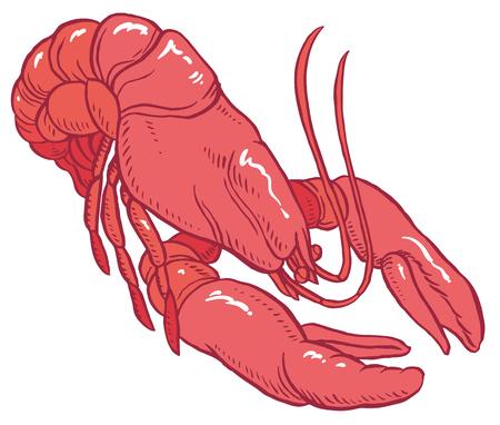 exoskeleton: red lobster - vector hand-drawing illustration for restaurant menu or packaging design