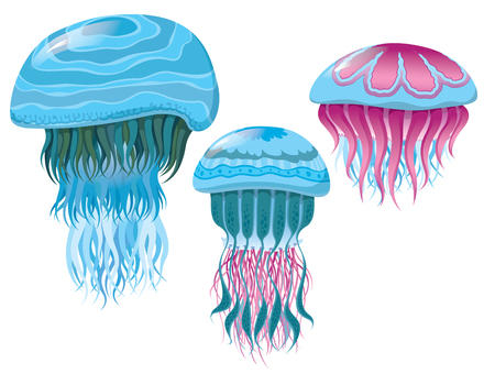 various fantastic jellyfish - Set of vector illustrations of marine life for design