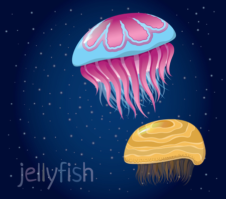 oceanography: various fantastic jellyfish - Set of vector illustrations of marine life for design