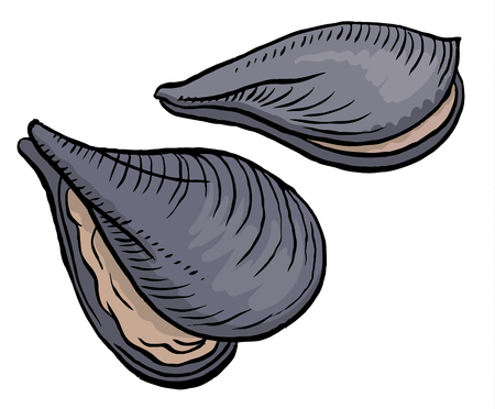 shellfish: oysters isolated on a white background Illustration