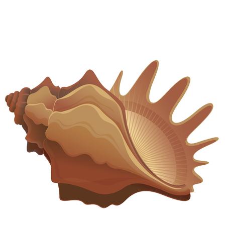 shellfish: colorful seashell isolated on white background - vector illustration