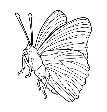 entomology: Butterfly - insect line drawing collection for design and scrapbooking