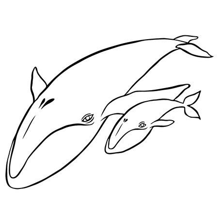 ballena azul: ballena azul - dibujo a mano de pintura de acuarela vector Vectores