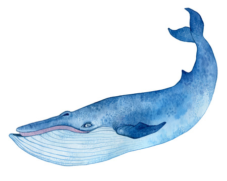 blue whale - watercolor hand drawing vector paint