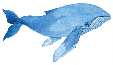humpback: Humpback whale - hand drawn watercolor vector illustration