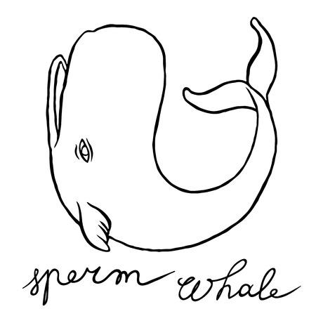 cartoon pen: Cachalot or sperm whale - sketch doodle line art