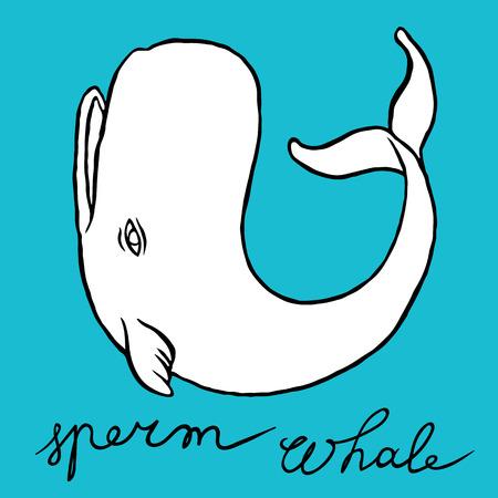 espermatozoides: Cachalote o ballena de esperma - línea arte del bosquejo del Doodle