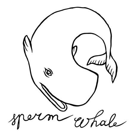 sperm whale: Cachalot or sperm whale - sketch doodle line art