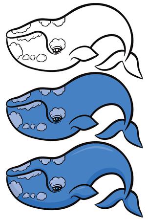 pygmy: Cartoon hand drawn vector illustration of whale Illustration