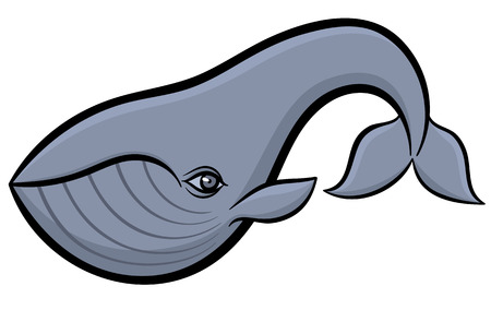 baleen whale: Cartoon hand drawn vector illustration of whale Illustration