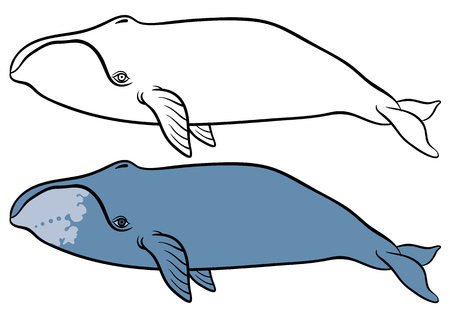 baleen whale: bowhead or greenland whale  - hand drawn vector illustration