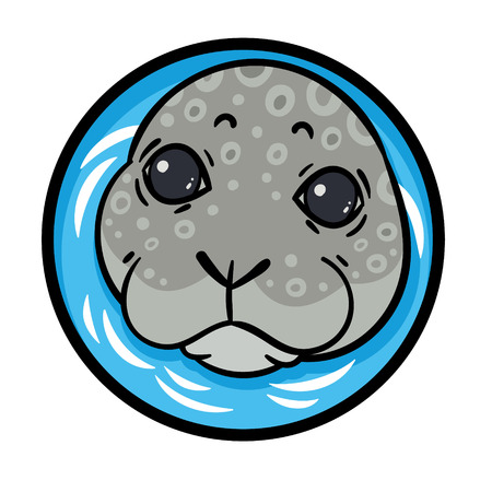 vector hand drawing seal head - harbor seal or sea calf - vector illustration Illustration