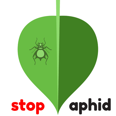 vermin: aphid pest vector illustration - set of household pests in pure style