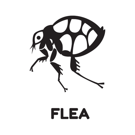 exterminate: flea home insect parasite vector illustration - set of household pests in pure style Illustration
