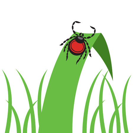 crouch: mite dangerous parasite vector illustration - set of household pests in pure style