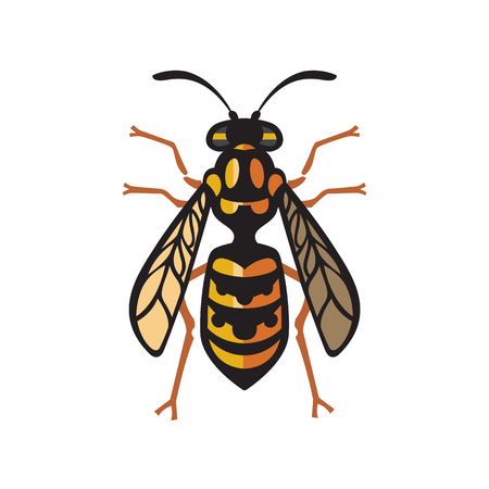 insect repellent: Wasp Bee Hornet vector illustration - set of household pests in pure style Illustration