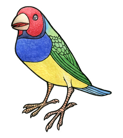 finch: Gouldian Finch hand drawing watercolor vector illustration - Erythrura gouldiae on white background