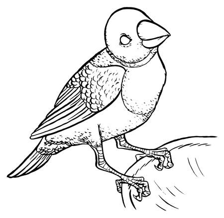 finch: Gouldian Finch hand drawing vector illustration - Erythrura gouldiae on white background