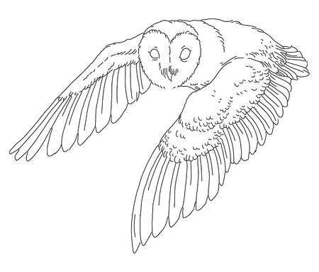 eyes looking up: Barn owl - linear vector hand drawing