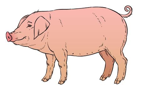 dessin à la main couleur de porc domestique - illustration vectorielle Vecteurs