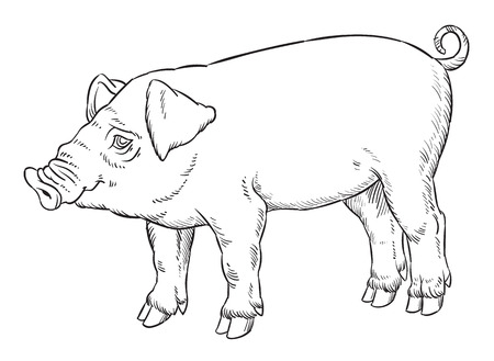 hooves: outline hand drawing of domestic pig - vector illustration