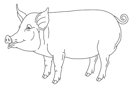 sow: outline hand drawing of domestic pig - vector illustration