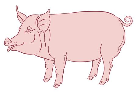 dessin à la main couleur de porc domestique - illustration vectorielle