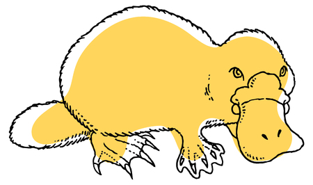 platypus: Cute vector platypus - Ornithorhynchus anatinus or Duckbill. You can design cards, part of platypus  , mascot, corporate character and so on. Lively animal character.