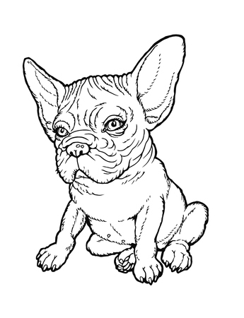 plump: Black and white line drawing plump french bulldog puppy. From a series of images of funny dogs.