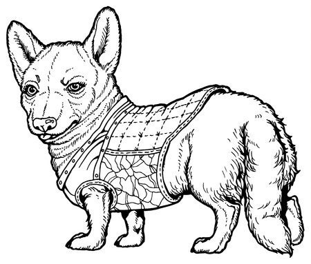 pembroke welsh corgi: Vector dog Pembroke Welsh corgi breed in clothes Illustration