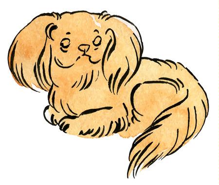 ベクター カラー スケッチ クロテンのペキニーズ犬 (ライオン犬ペキニーズ ライオン犬、Pelchie 犬、またはペケ)